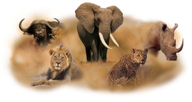 COMRADES_Africa